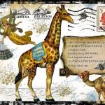 artist-inspiration-nick-bantock-mail-art-flickr-photo-sharing